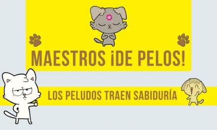 MAESTROS DE PELOS